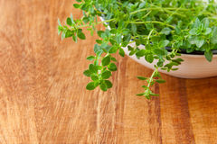 Thyme herb on wooden cutting board. Stock Photo