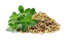 Thyme herbs isolated. royalty free stock photo