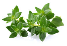 Thyme herbs Royalty Free Stock Image
