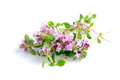 Thyme isolated Stock Image