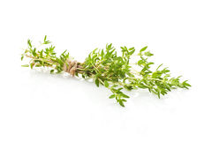 Thyme isolated. Royalty Free Stock Image