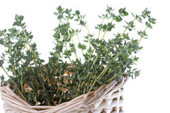 Thyme Isolated Royalty Free Stock Images