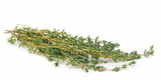 Thyme isolated Stock Photography