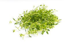 Thyme. Royalty Free Stock Images