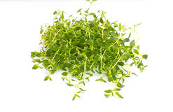 Thyme. Stock Images