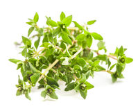 Thyme isolated Royalty Free Stock Photography