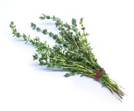 Thyme isolated on white background. Thyme is isolated on white background Royalty Free Stock Photos