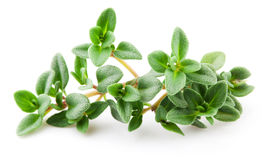 Thyme isolated on white. Macro Stock Photography
