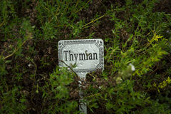 Thyme with label Stock Image