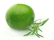 Thyme and laim.lemon Stock Photo