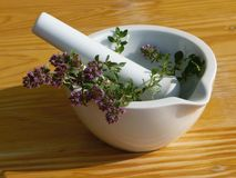 Thyme in mortar Stock Photo