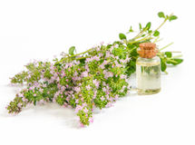 Thyme and oil Stock Photo