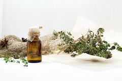 Thyme oil skincare. Bottle of herbal extract, aromatic fresh green twigs. Royalty Free Stock Photography