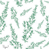 Thyme plant seamless pattern. Hand drawn seamless pattern thyme  plant with leaves on white background. Vintage spicy herbs sketch.  Doodle cooking ingredient Stock Images