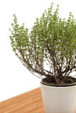 Thyme plant Royalty Free Stock Photo