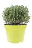 Thyme in pot Royalty-vrije Stock Afbeeldingen