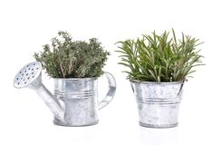Thyme and rosemary Stock Image