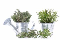 Thyme and rosemary Stock Photos
