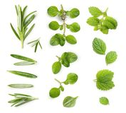 Thyme,rosemary twig and mint isolated stock photography