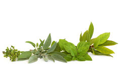 Thyme, Sage, Oregano and Bay Herbs. Thyme, sage, oregano and bay leaf herbs, isolated over white background stock photography