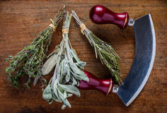 Thyme, Sage and Rosemary Herbs Stock Photos