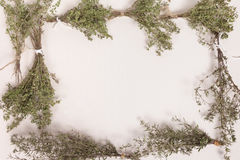 Thyme and Savory Herb Frame Royalty Free Stock Image