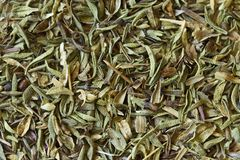 Thyme Spice. Thyme is a culinary and medicinal herb of the genus Thymus. Can be used as a background stock images