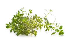 Thyme spice Stock Images