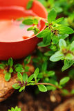 Thyme spice outdoor Stock Images