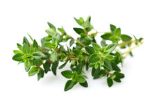 Thyme spice royalty free stock photography