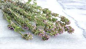 Thyme Royalty Free Stock Photos