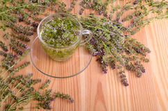 Thyme and tea in cup Stock Photo