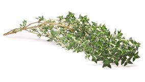 Thyme (Thymus vulgaris), clipping path Stock Photo