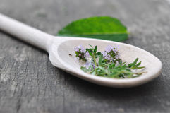Thyme in wooden spoon Stock Images