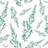 Thymianbetriebsnahtloses Muster Stockbilder