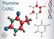 Thymine Thy - pyrimidine  nucleobase, fundamental Stock Images