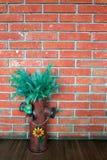 Thymophyllia染黄花,在红砖墙壁ba的自然夏天 库存图片