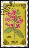Thymus gobica, serie poświęcać kwiaty, około 1986 Zdjęcie Royalty Free