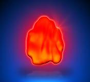 Thymus - Internal organs Stock Photos