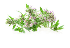Thymus Royalty Free Stock Image