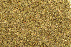 Thymus vulgaris. A full of green thymus vulgaris seeds Royalty Free Stock Photo