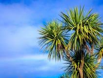 Ti kouka New Zealand cabbage palm tree. Landscape with a blue sky Royalty Free Stock Photos