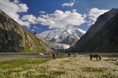 Tian-Shan nel Kirghizistan Fotografie Stock Libere da Diritti