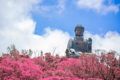 Tian Tan Buddha, grande Budda, Tian Tan Buddha enorme al Po Lin Monastery in Hong Kong immagine stock
