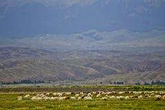 Tianshan mountain pasture Royalty Free Stock Image