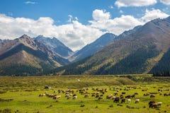 Tianshan mountain scenery stock photo
