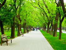 Tiantan park path. Tourists walking under the shade of green trees inside Tiantan Park in Beijing China Stock Photography