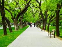 Tiantan park path. Tourists walking under the shade of green trees inside Tiantan Park in Beijing China Stock Photos