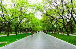 Tiantan park path. Tourists walking under the shade of green trees inside Tiantan Park in Beijing China Stock Photo