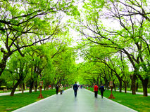 Tiantan park path. Tourists walking under the shade of green trees inside Tiantan Park in Beijing China Royalty Free Stock Images